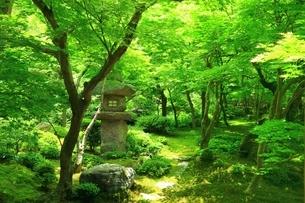 新緑の圓光寺 京都の写真素材 [FYI04677094]