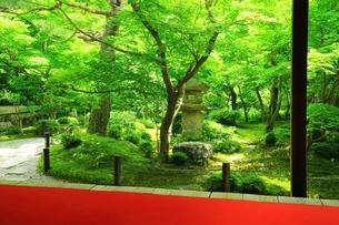 新緑の圓光寺 京都の写真素材 [FYI04677095]