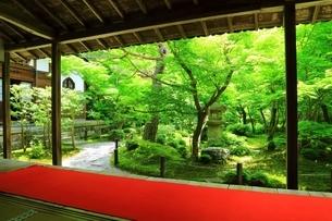 新緑の圓光寺 京都の写真素材 [FYI04677096]