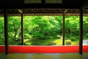 新緑の圓光寺 京都の写真素材 [FYI04677097]