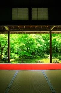 新緑の圓光寺 京都の写真素材 [FYI04677098]