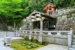 新緑の清水寺 音羽の滝の写真素材 [FYI04677109]