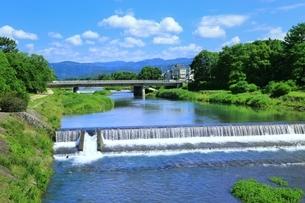 新緑の賀茂川の写真素材 [FYI04677240]