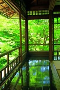 新緑の瑠璃光院の写真素材 [FYI04677247]