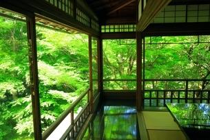 新緑の瑠璃光院の写真素材 [FYI04677248]