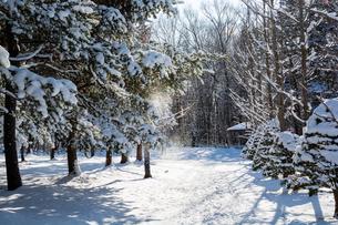 冬の日射しを浴びる公園の写真素材 [FYI04677478]