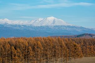 黄葉のカラマツ林と冠雪の山並みの写真素材 [FYI04677484]