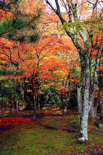 高野山の紅葉2の写真素材 [FYI04678204]