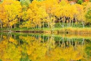 志賀高原の秋の木戸池の写真素材 [FYI04678379]