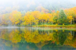 志賀高原の黄葉の木と木戸池の写真素材 [FYI04678389]