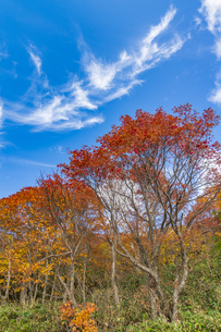 秋色に染まる磐梯吾妻スカイラインの写真素材 [FYI04678698]
