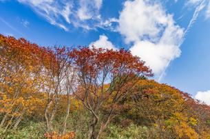 秋色に染まる磐梯吾妻スカイラインの写真素材 [FYI04678700]
