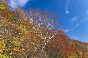 秋色に染まる磐梯吾妻スカイラインの写真素材 [FYI04678707]