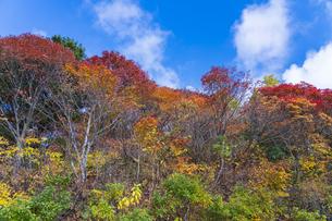 秋色に染まる磐梯吾妻スカイラインの写真素材 [FYI04678710]