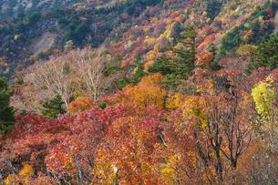 秋色に染まる磐梯吾妻スカイラインの写真素材 [FYI04678711]
