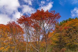 秋色に染まる磐梯吾妻スカイラインの写真素材 [FYI04678715]