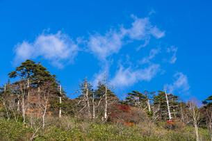 秋色に染まる磐梯吾妻スカイラインの写真素材 [FYI04678742]
