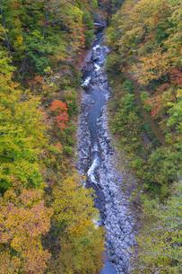 初秋の中津川渓谷の写真素材 [FYI04678915]