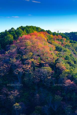 吉野山の紅葉の写真素材 [FYI04679206]