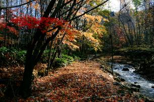 紅葉と川の写真素材 [FYI04679272]