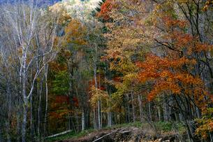 森の紅葉の写真素材 [FYI04679273]