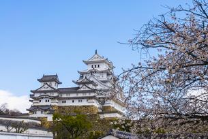 桜と姫路城の写真素材 [FYI04679718]