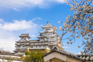 桜と姫路城の写真素材 [FYI04679720]