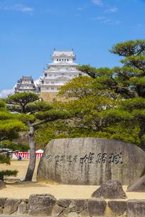 松と姫路城の写真素材 [FYI04679724]