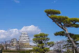 松と姫路城の写真素材 [FYI04679725]