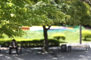 公園の新緑の写真素材 [FYI04680021]