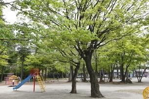 宮城県 勝山公園の写真素材 [FYI04680035]