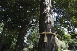 しめ縄を巻いた木の写真素材 [FYI04680038]