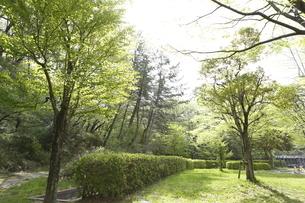 宮城県 台原緑地の写真素材 [FYI04680070]