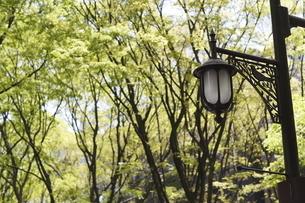 宮城県 定禅寺通の街灯と新緑の写真素材 [FYI04680112]