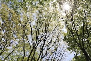 新緑の木々と木洩れ日の写真素材 [FYI04680113]