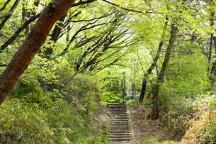 宮城県 台原緑地の写真素材 [FYI04680129]