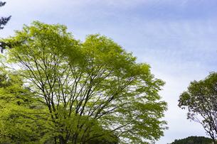 新緑の木々の写真素材 [FYI04680130]
