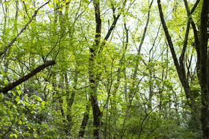宮城県 台原緑地の木々の写真素材 [FYI04680132]
