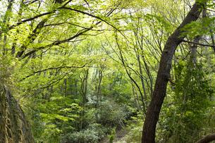 宮城県 台原緑地の木々の写真素材 [FYI04680133]
