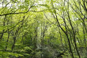 宮城県 台原緑地の木々の写真素材 [FYI04680137]
