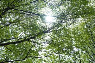 新緑の枝と木洩れ日の写真素材 [FYI04680138]