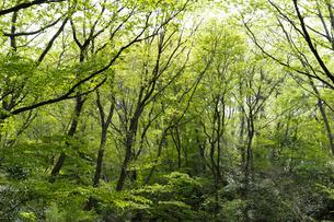 宮城県 台原緑地の木々の写真素材 [FYI04680139]