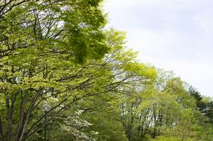 新緑の木々の写真素材 [FYI04680145]