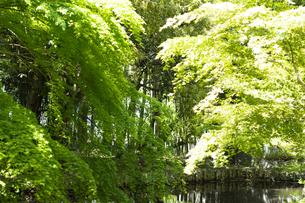 新緑の木々の写真素材 [FYI04680210]
