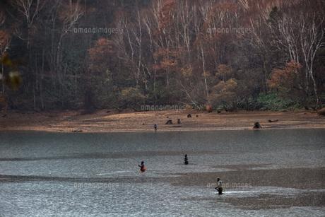 ダケカンバと釣り人の写真素材 [FYI04680240]