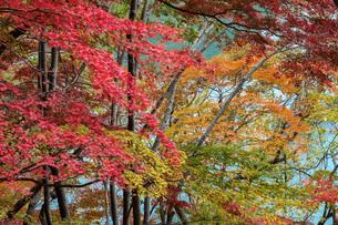 湖の紅葉の写真素材 [FYI04680257]
