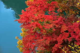 湖の紅葉の写真素材 [FYI04680258]