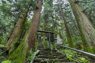 軍刀利神社の石段の写真素材 [FYI04680504]