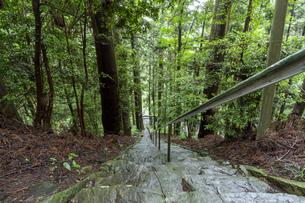 軍刀利神社の石段の写真素材 [FYI04680510]