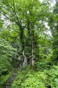 軍刀利神社の石段の写真素材 [FYI04680512]